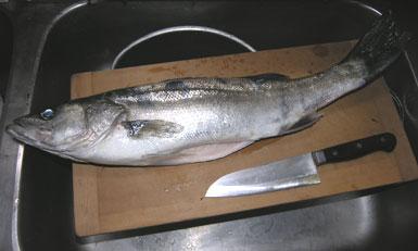 060507fish55cm